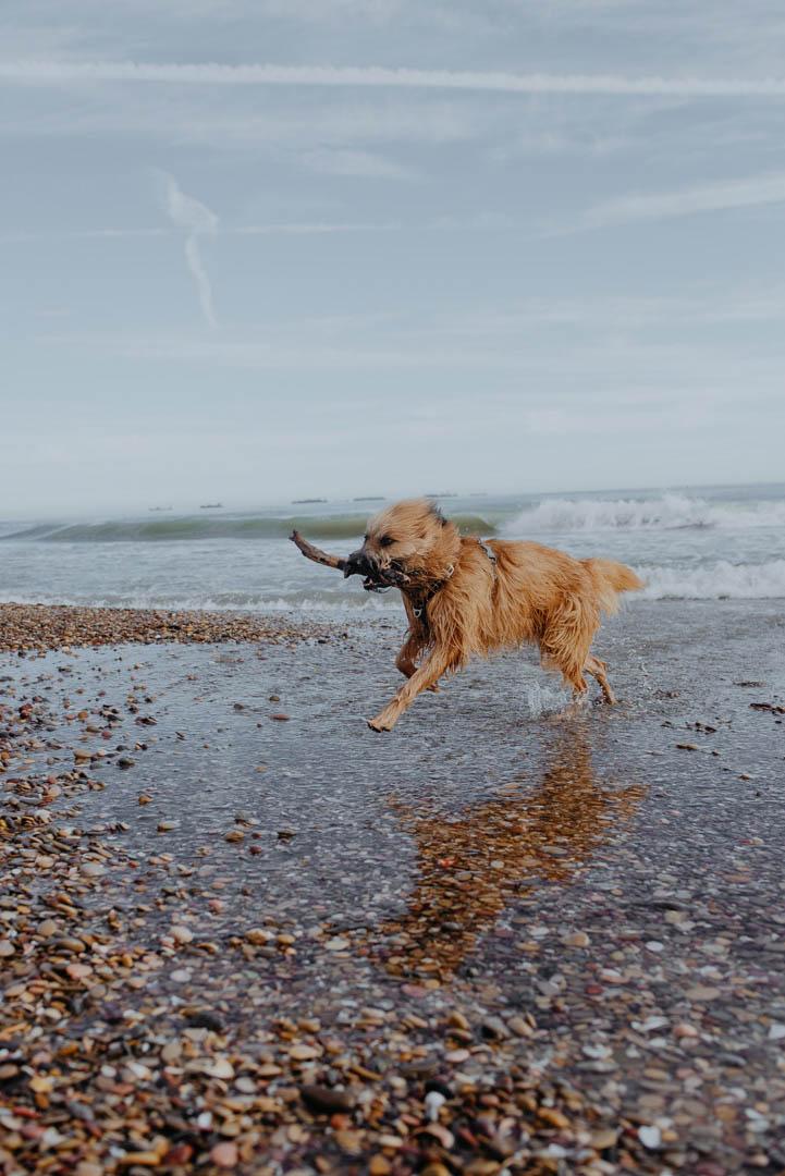Fotografia de perros en la playa